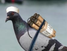 birdbrain-whome