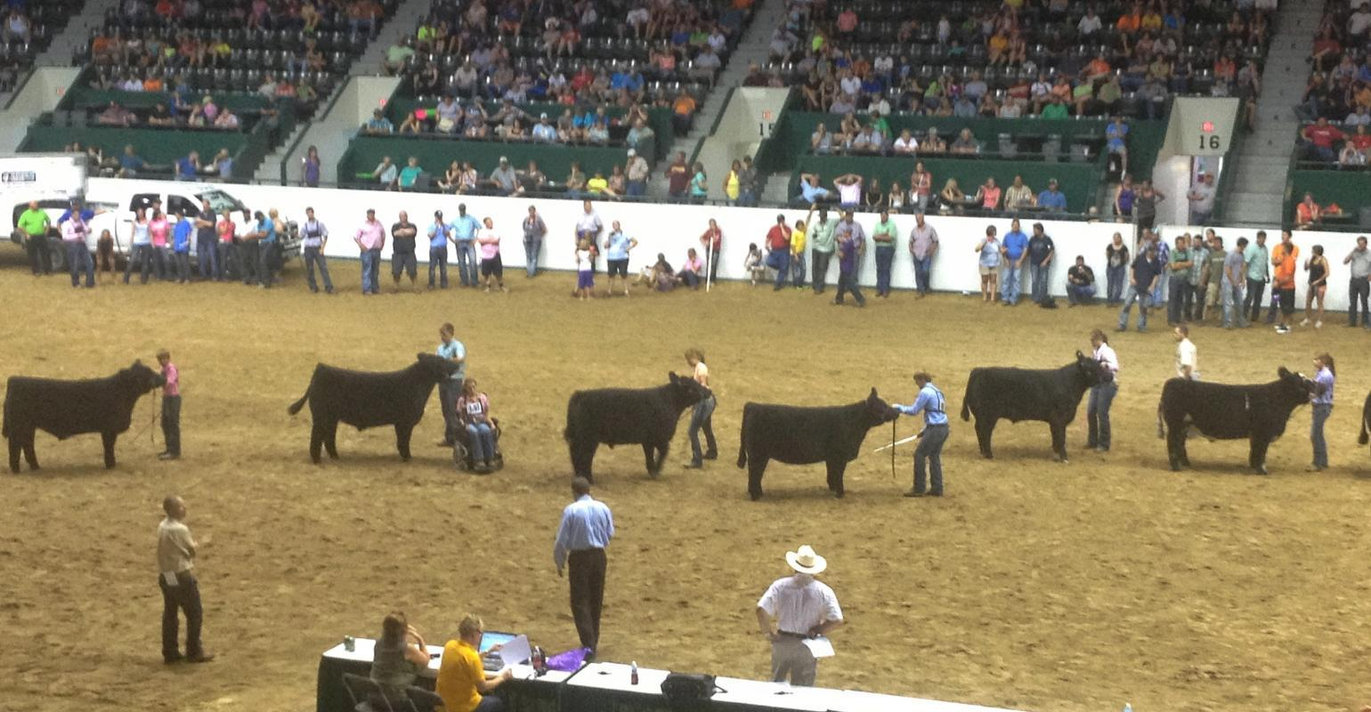 minnesota-state-fair-cattle-show.jpg